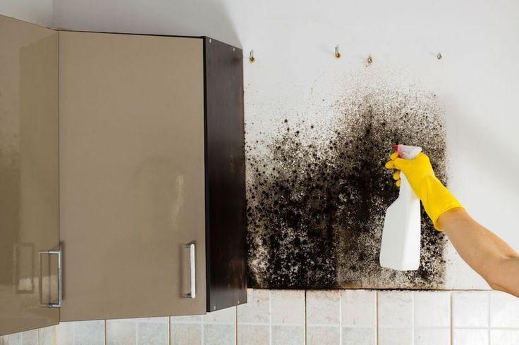 Muffa sui muri: come eliminarla?