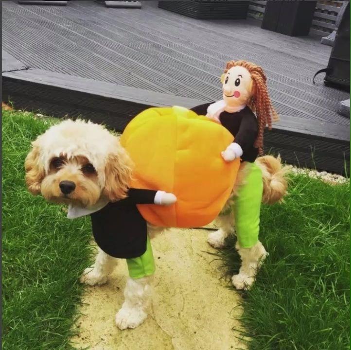 2019 Hot Pet Dog Pumpkin Disfraz de Halloween   – Süß