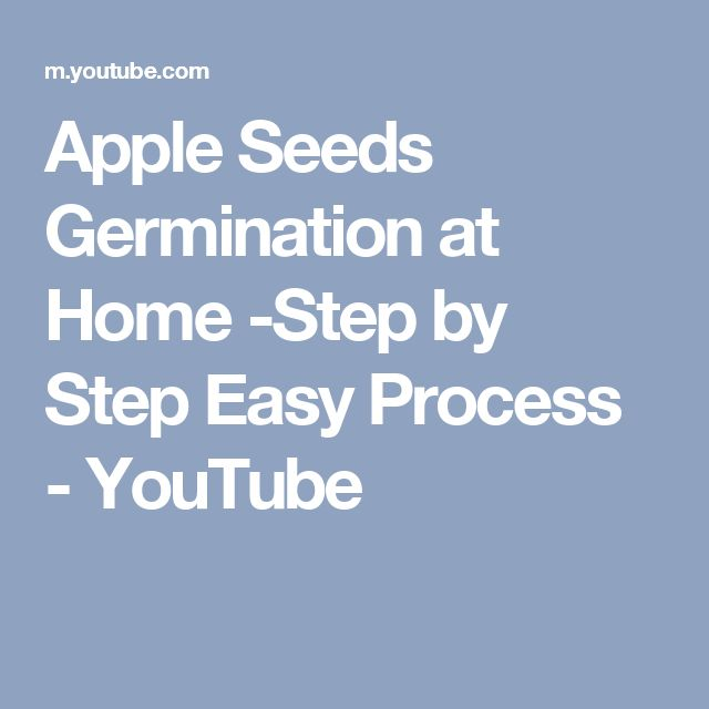 Apple Seeds Germination at Home -Step by Step Easy Process - YouTube
