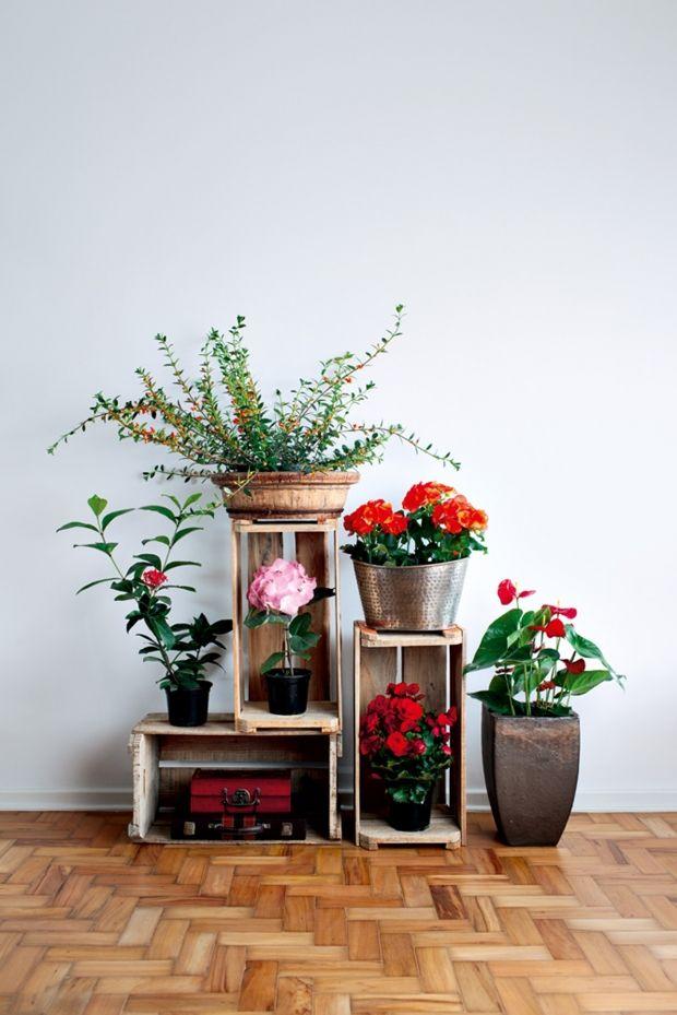 Plantas para cultivar em apartamento - mesmo que você tenha pouco tempo e pouco Sol