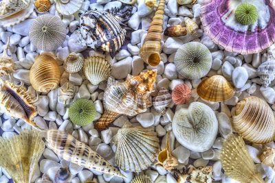 Thedayaftergr: Greece seashells
