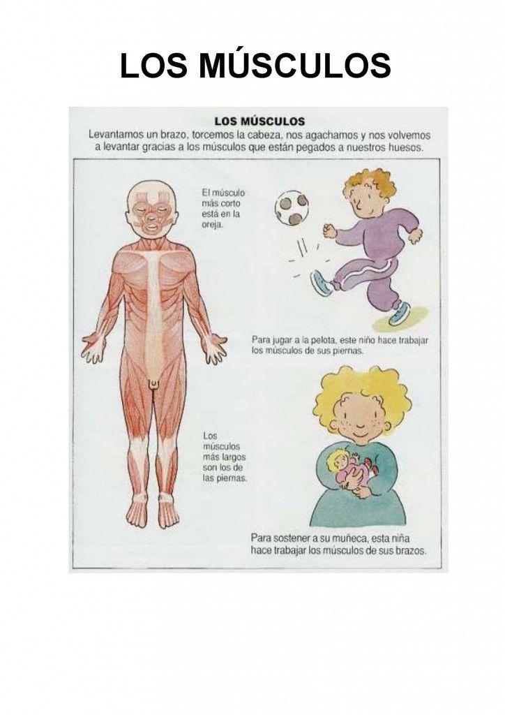 Fichas encontradas en picasa para repasar las partes del cuerpo humano y su funcionamiento: Los riñones, el aparato circulatorio, el cerebro, los pulmones