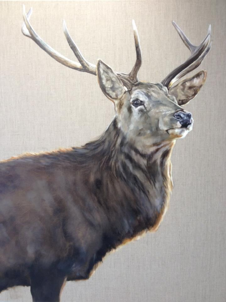 """Tony O'Connor whitetreestudio.ie One of my favorites of the year """"Rí na Ghleanna"""", which is gaelic for The King of the Glen. 100cmx100cm oil on natural linen. A massive thank you to Jessica Crighton Original Art for the kind permission to use her amazing image as resource"""