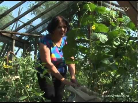 Выращивание огурцов в мешках: тонкости и секреты необычного способа.