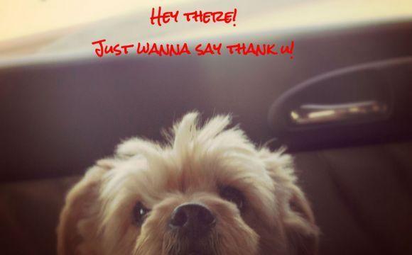 Grazie!  http://www.weapulia.com/blog-single.php?blogID=34&u=grazie