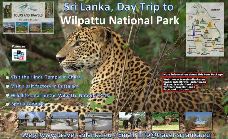 1 Day Trip From Negombo / Colombo to the Wilpattu National Park