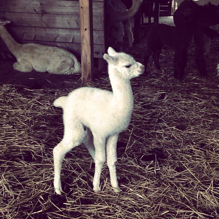 Angelo kilka dni po urodzeniu...