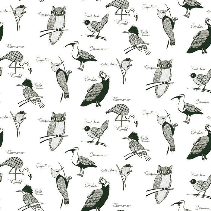 Aves de Chile | Hued hued