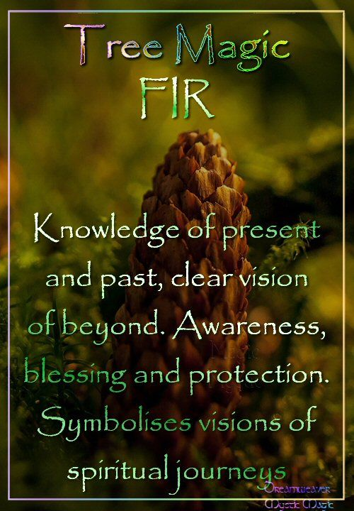 FIR Knowledge of present and past, clear vision of beyond. Awareness, blessing and protection. Symbolises visions of spiritual journeys