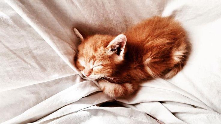 ��#buongiorno #gatto #pet #petstagram #nature #kitten #kittens #catstagram #cutie #pets #kitty #catlovers #catsofinstagram #animal #sweet #golook #life #catlover #ilovemycat #ilovemypet #instapets #petsagram #meow #picpets #sleep #nature #animals #photography #photooftheday #picoftheday #lion http://tipsrazzi.com/ipost/1523095358601718419/?code=BUjHyiwgGqT