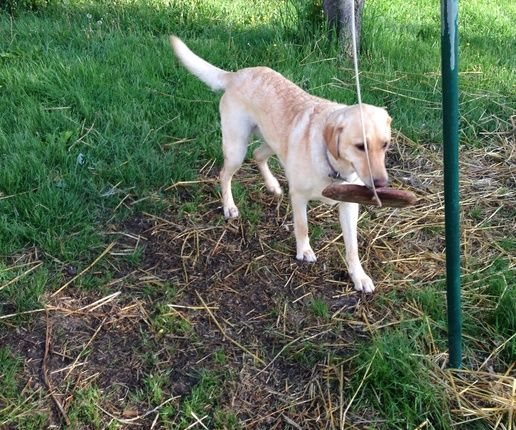 Yard Toys For Dogs : Best images about dog games on pinterest diy toys