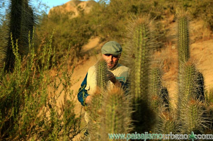 Ignacio Solano fotografiando ECHINOPSIS CHILOENSIS — en Chile, La Serena.