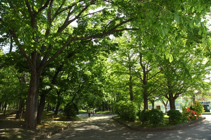 nakashima park