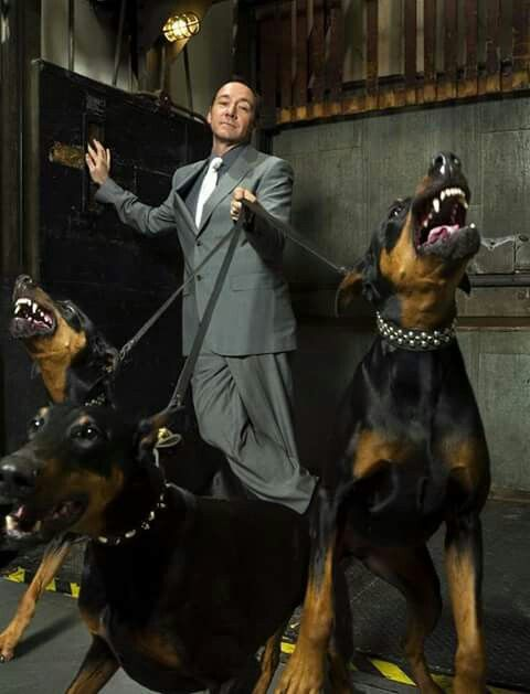 Kevin Spacey and Dobermans