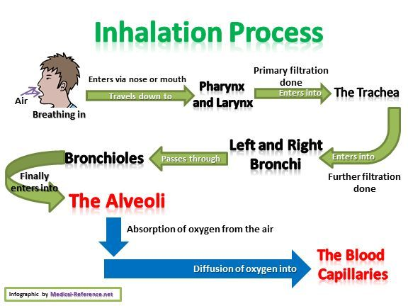 Flow chart of inhalation process  #Inhalation-Process #Respiration #respiratory