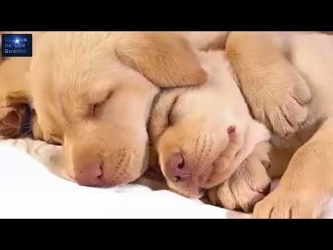 Música para dormir Bebés - Canciones de Cuna -Música Relajante para Bebé...