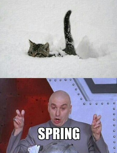spring, winter, seasons change, dr evil, austin powers, cat in snow, snow, spring snow