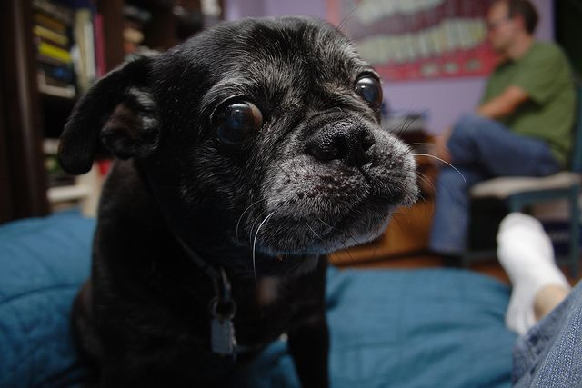 You can't teach an old dog new tricks is a saying that has been around for decades. But the fact is, you can teach an old dog new tricks, and it's not that much different from teaching a younger …