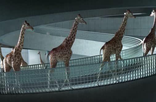 High Diving Giraffes.