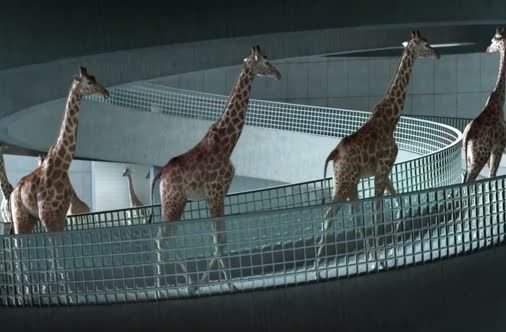 High Diving Giraffes.