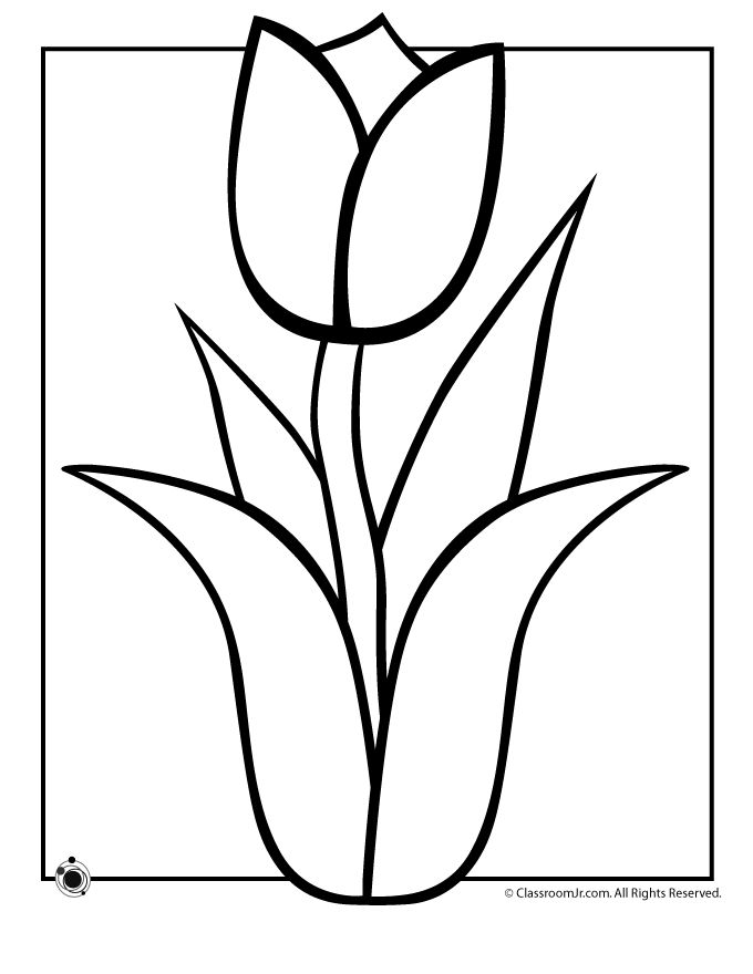 Coloring pages tulip outlines flower tulip flower black tulip stem