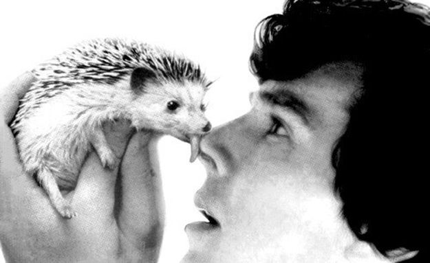 I can't decide which is more adorable: Benedict, or the hedgehog, or the fact that Benedict is cuddling a hedgehog.