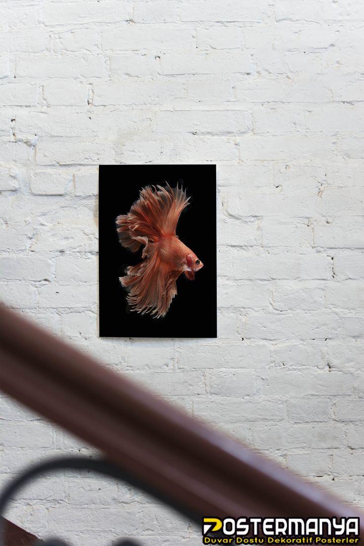 Evinize renk katacak birbirinden güzel sanatsal tablolar ve posterler Postermanya'da :) #evdekorasyonu #dekorasyonfikirleri #dekorasyonönerileri #postermanya #poster #afiş #desing #tablo #duvardekoru #wall #homedesign #sevgiliyehediye #tablo #posters #tasarım #dekorasyon #canvas #kanvas #kanvastablo #hediye #hediyelik #sanatsal #tablolar #hayvan #posterleri #balık