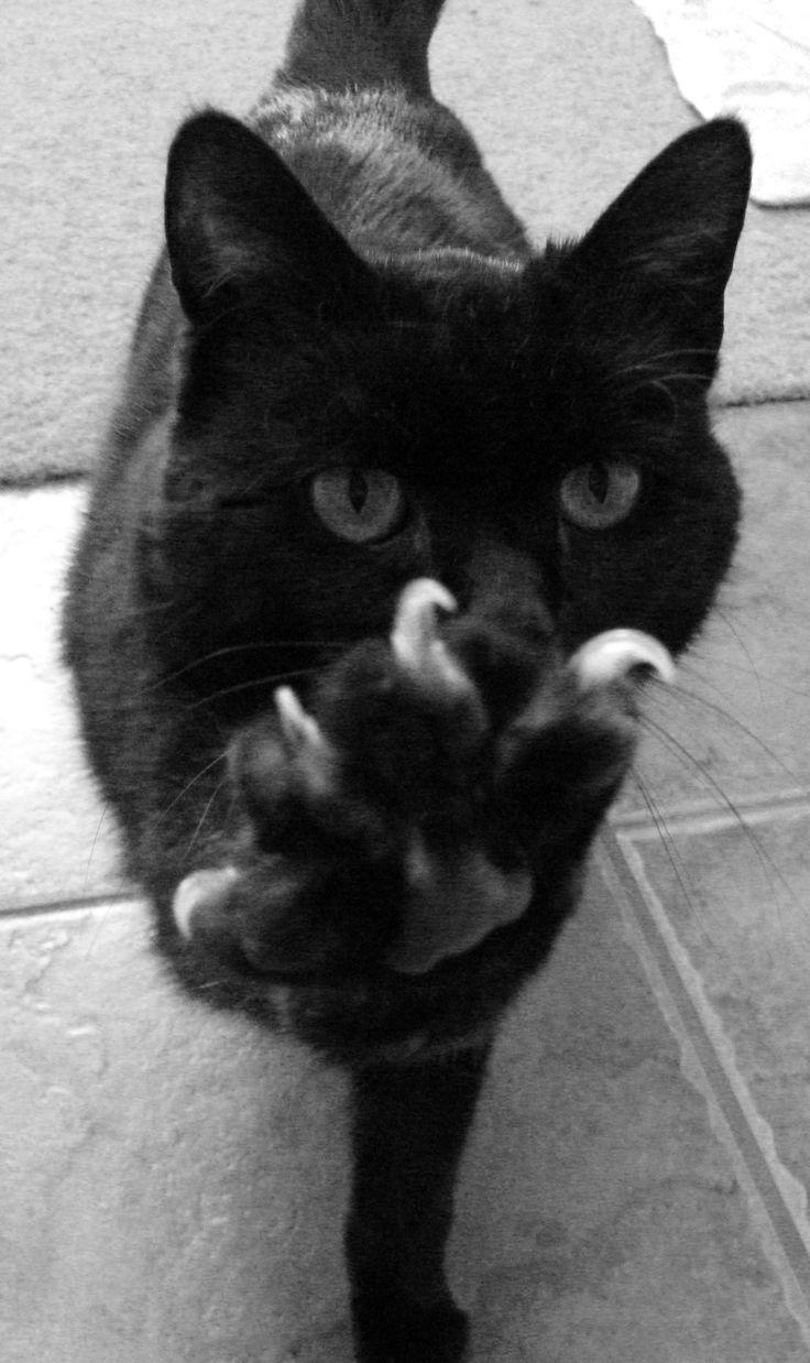 : Funny Kitty, High Five, Kitty Cat, Cat Claws, Pet, Cat Meow, Edward Scissorhands, Blackcat, Black Cat