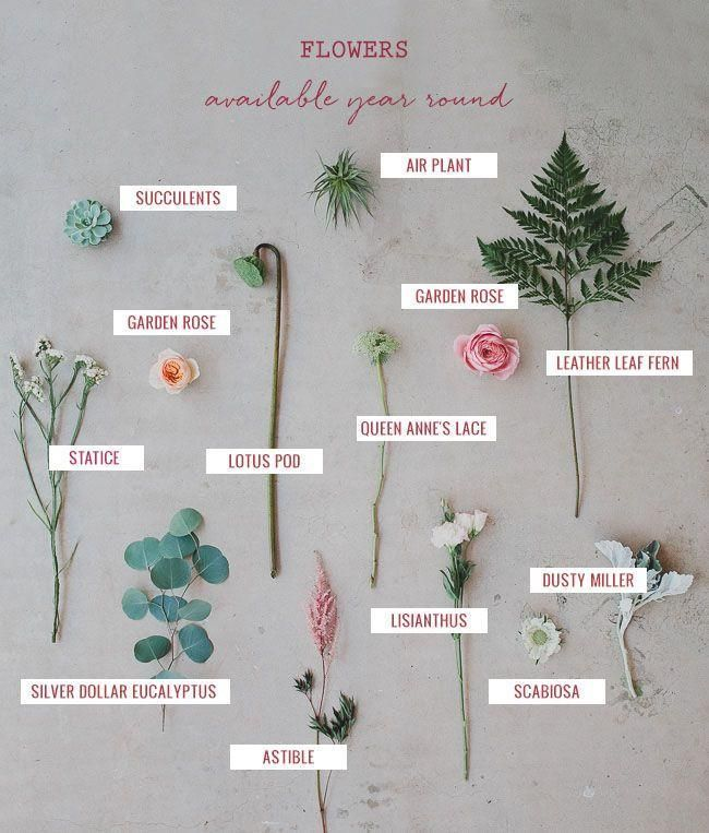 Pretty flowers available year round: garden roses, astilbe, eucalyptus, succulents + more!