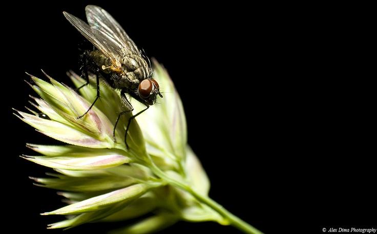 A fly taking a break.