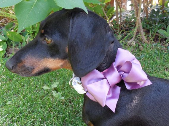 211 Best Pet Wedding Accessories Images On Pinterest