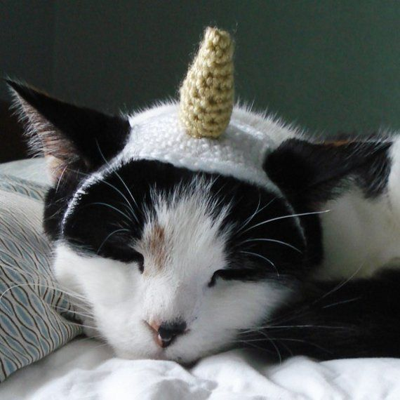 WHAT??!!!  crochet pattern unicorn pet costume by xmoonbloom on Etsy
