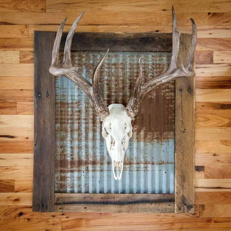 Whitened skull with rustic tin wall frame. Includes wall mounting hardware and skull mounting bracket. Price as pictured is $200. The rustic tin frame can be purchased alone for $100.