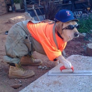 National Dog Day Pics