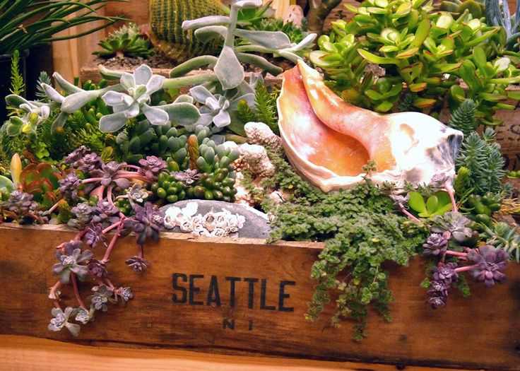 Succulent Container Gardens | Small Space Gardening | Honeysuckle Life