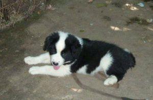 Puppies by AnimalWelfare