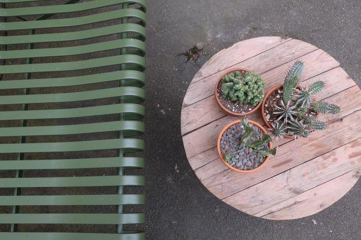Cacti Hay