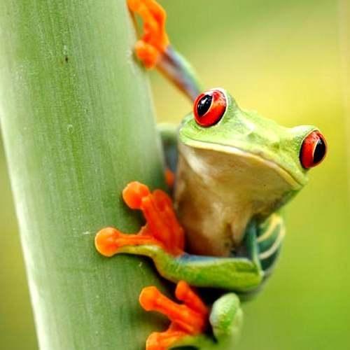 Rondreizen Costa Rica - Privérondreizen & groepsreizen Costa Rica - NRV Holiday Rondreizen