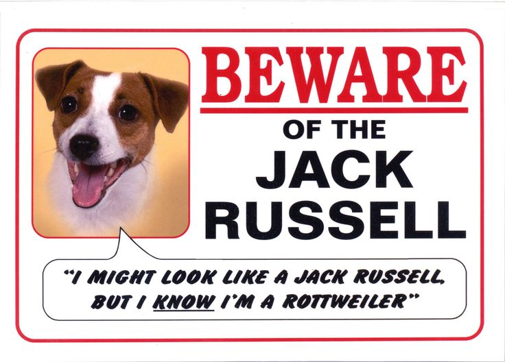 JACK-RUSSELL-TERRIER-DOG-FUNNY-BEWARE-SIGN-OTHER.jpg (1600×1148)