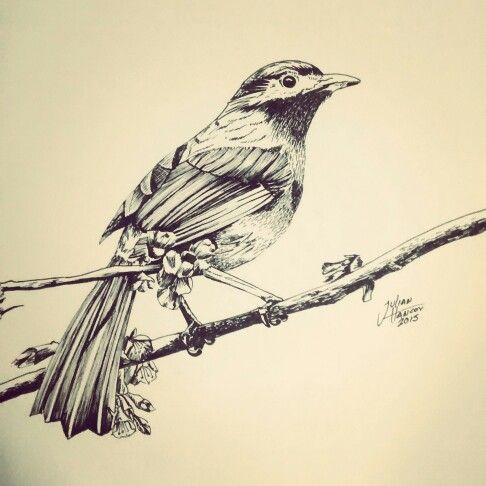 #Bird #Drawing #Ink Bird made whit Ink