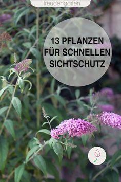 Sichtschutz im Garten mit schnell wachsenden Pflanzen