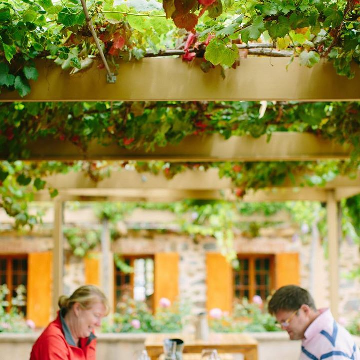Our gardens are putting on such a beautiful summer display to match perfectly with our award winning wines!  Take some time out this long weekend and visit us in the Tasting Room.   http://youtu.be/GyZ86d_Sm2I http://www.murraystreet.com.au/our-wines/  #AustraliaDay #MSVWine