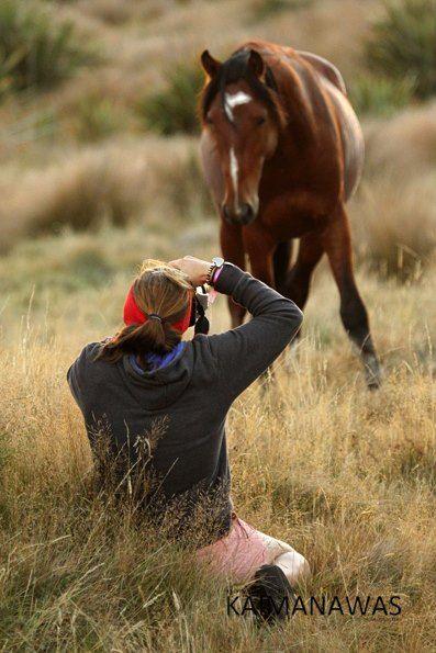 Photographing a wild Kaimanawa horse