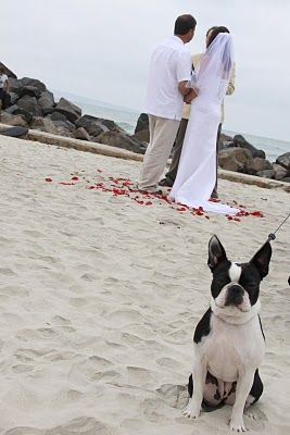 Weddings on the beach make for a beautiful, pet-friendly venue