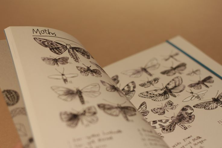 Illustrated Nature Journal.