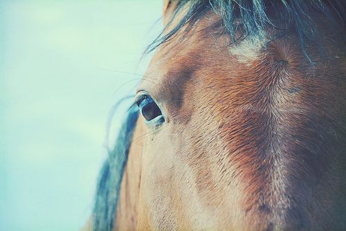 horse 3 by mrs. french, via Flickr: Dining Rooms, Trees Necklaces, Best Friends, Horses, Basements Colors, Colors Palettes, Colors Schemes, Families Trees, Animal