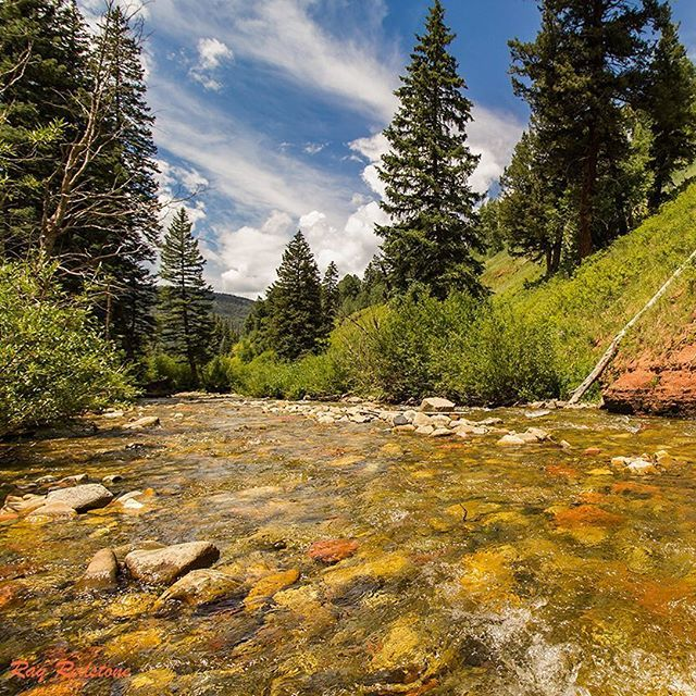 260 best southern colorado images on pinterest aspen for Aspen fly fishing