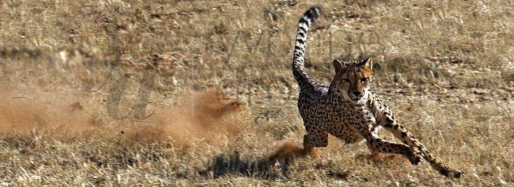 Namibia - Park Narodowy Etosha