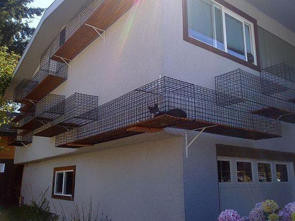 Un passaggio esterno sicuro per far scorrazzare i vostri gatti e per rendere bella la vostra casa