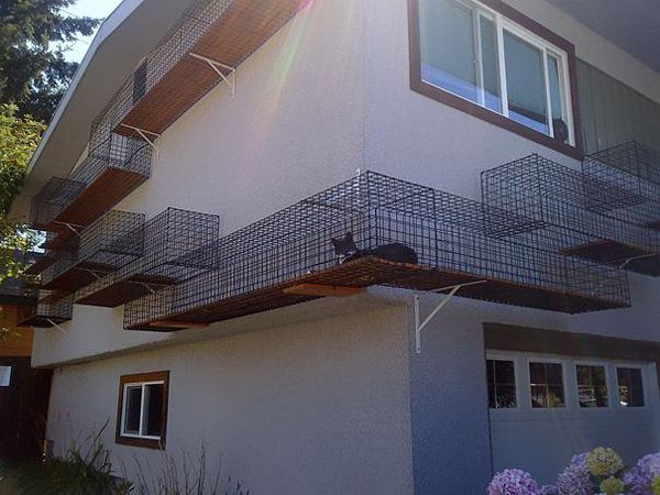 23. A safe outdoor catwalk that'll allow your kitties to roam. And make your house look awesome.